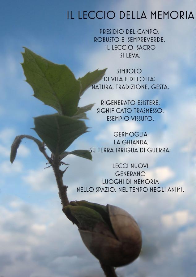 leccio (2)