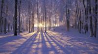 Condividiamo la riflessione pre-solstiziale di Azione Tradizionale di qualche anno addietro, nel quale riscontriamo gran parte di quello che tutti noi abbiamo provato e proviamo […]