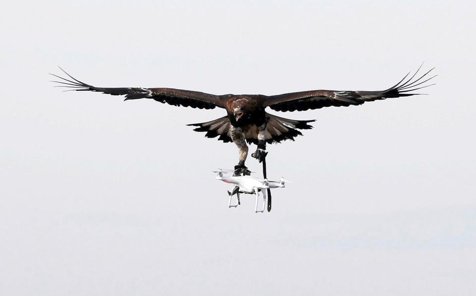 aquila attacca drone 2