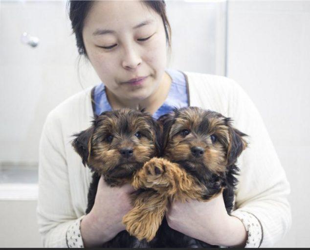 clonazione-cani