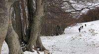(www.georientamenti.org) – 14/12/2017 – Da sempre considerata luogo sacro e metafora di una vita condotta in senso verticale, la montagna può essere vissuta in tanti […]